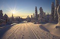 Snölandskap i skidspåret med solen över trädtopparna