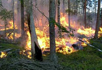 Det brinner i mark och trädstammar, oranga lågor sprider sig ibland det gröna gräset och barren.