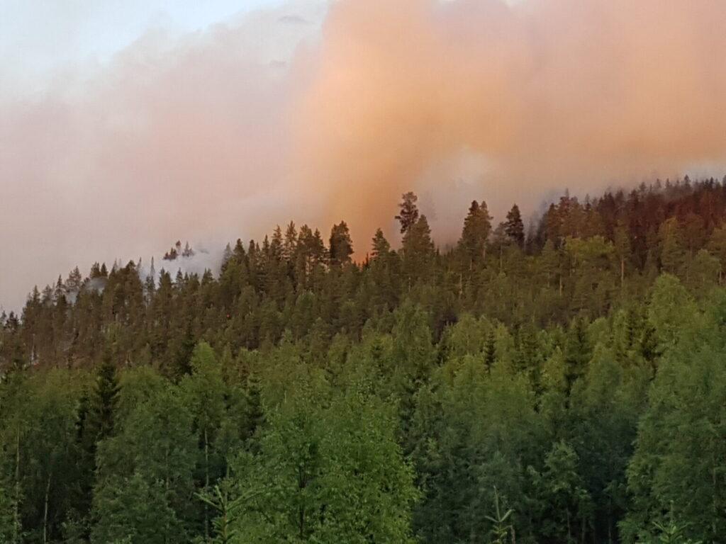 Bergsluttning med träd och rök