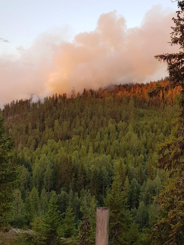 Bergssluttning med träd och mycket rök